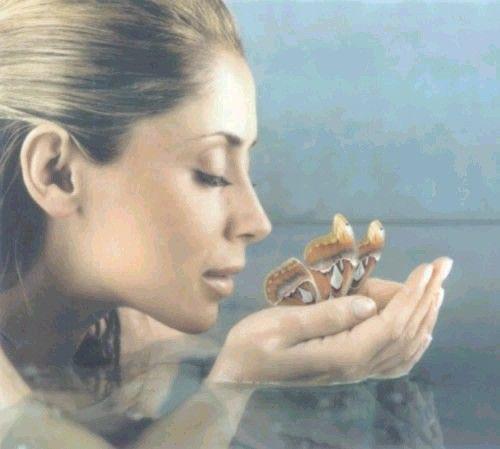 Papillon Lara Fabian: Paroles Lara Fabian : Paroles De Chansons, Traductions Et
