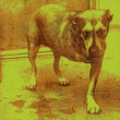 Alice In Chains (1995)