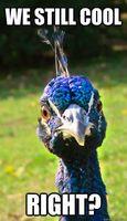 IWannaSeeYourPeacock